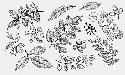 Leaves set. Hand drawn decorative elements. Vector illustration