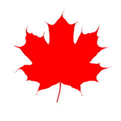 Icon Red maple leaf as symbol of Canada as autumn seasonal concept as design of fall weather isolated on white background.
