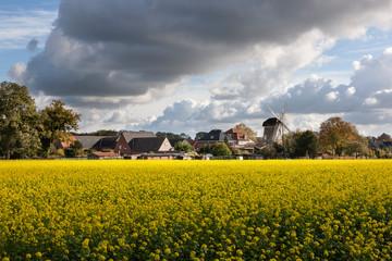 Senfpflanzenfeld mit Turmwindmühle in Raesfeld-Erle
