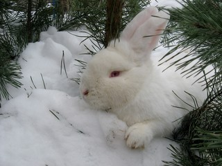 rabbit under the tree in the snow