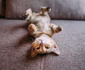 Cute kitten lying on its back on sofa.