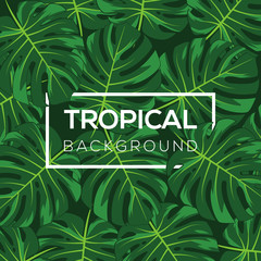 Monstera Leaves Tropical Background