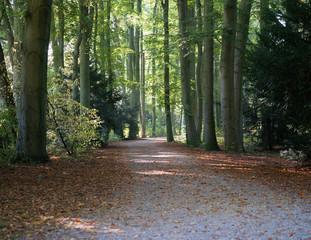 Baumallee mit Laub auf dem Weg im Herbst