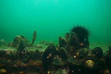 Wall Murals Green coral shell mussels on the sea bottom underwater photo
