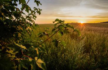 Romantische Landschaft mit Himmel und Abendrot im Erzgebirge