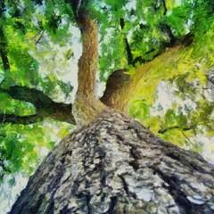Obraz zielone drzewo
