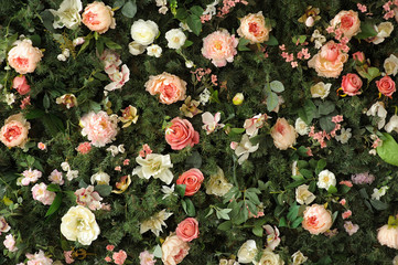 Closeup image of beautiful flowers wall background with amazing red and white roses and peonies on the fir branches