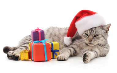 Cat with Christmas gifts.