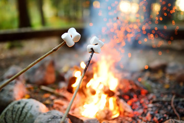 Roasting marshmallows on stick at bonfire. Having fun at camp fire.