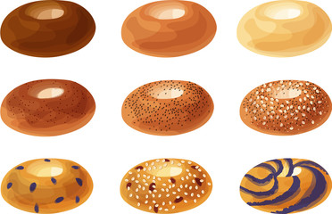 Plain, Cinnamon Sugar, Poppy Seed, Everything, Blueberry, Cranberry and Oat, and Blueberry Swirl Bagels. Isolated vector illustrations.