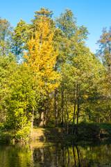 Tuinposter Canada Autumn landscape. Golden trees in the autumn park