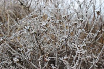 木の枝の樹氷