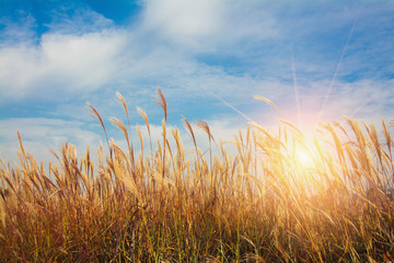 Grassland. Wild grass in the morning sunlight. ideal use for background. natural background