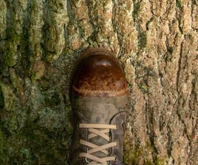 Nasser Stiefel beim Waldspaziergang an Baumrinde