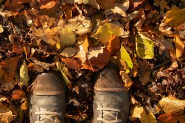 Damen-Boots in feuchtem Herbstlaub