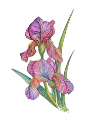 Beautiful bouquet of iris flowers, tattoo