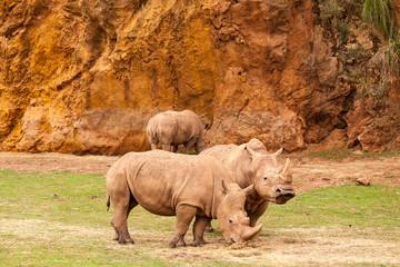 Rinoceronte africano - toma 1