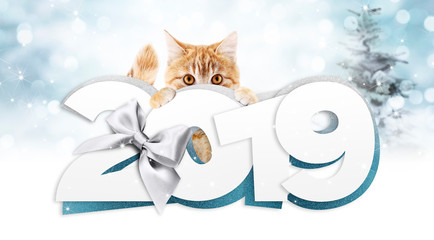ginger cat showing happy new year 2019 text with silver ribbon bow on blurred blue christmas lights, signboard or gift card for pet shop or vet clinic