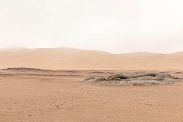A beautiful, desolate scene at Skeleton Coast, Namibia.