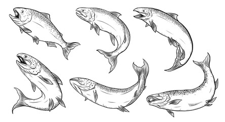 Salmon art highly detailed in line art style.Fish vector by hand drawing.Fish tattoo on white background.Black and white fish vector on white background.Salmon fish sketch for coloring book.
