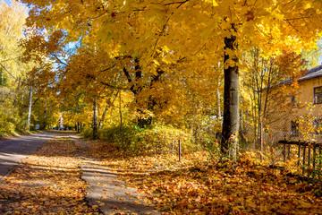 Golden Autumn in the city - October 2018