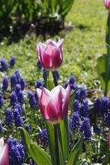 fotos de plantas flores varias