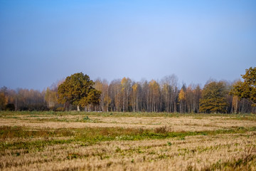 empty field in late autumn