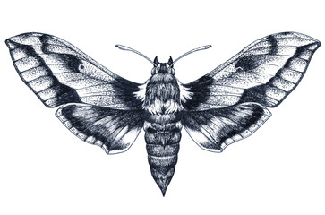 Hand drawn butterfly tattoo. Dotwork tattoo. Hummingbird hawk moth. Macroglossum stellatarum. Lepidoptera.