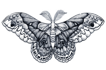 Butterfly tattoo art. Dotwork tattoo. Hyalophora cecropia. Cecropia moth. Symbol of freedom, nature, beauty, perfection