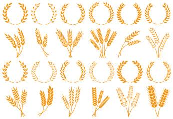 Fototapeta Wheat or barley ears. Harvest wheat grain, growth rice stalk and bread grains isolated vector set