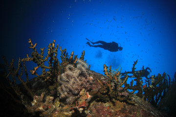Scuba divers underwater on coral reef