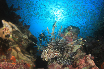 Deurstickers Onder water Lionfish fish on coral reef