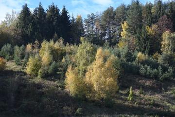 Wall Murals Natuur Herbstwald