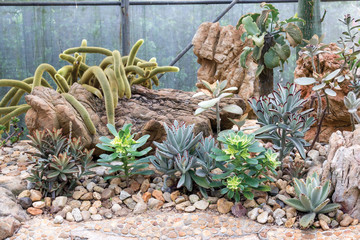Group of cactus in the green house