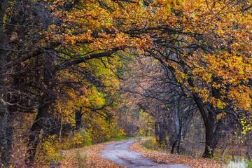 road through the red autumn oak grove