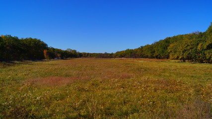 field in the forest