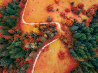 arial veiw of rural  road in colorful autumn  forest. drone shot