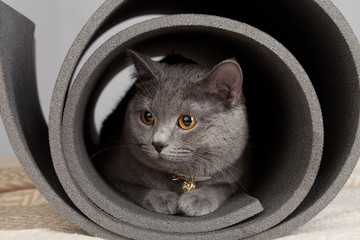 Grey cat sitting in a twisted yoga mat.