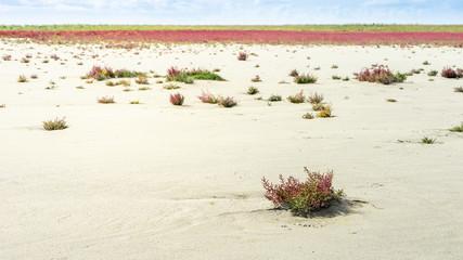 Salzwiese am Strand