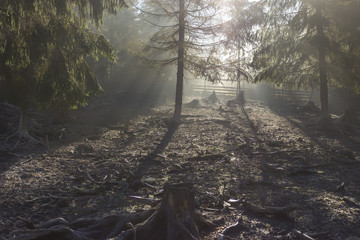 The rays of the sun illuminate the forest clearing
