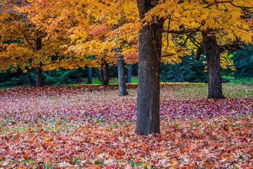 Autumn scenery at Finch Arboretum, Spokane, Washington, USA