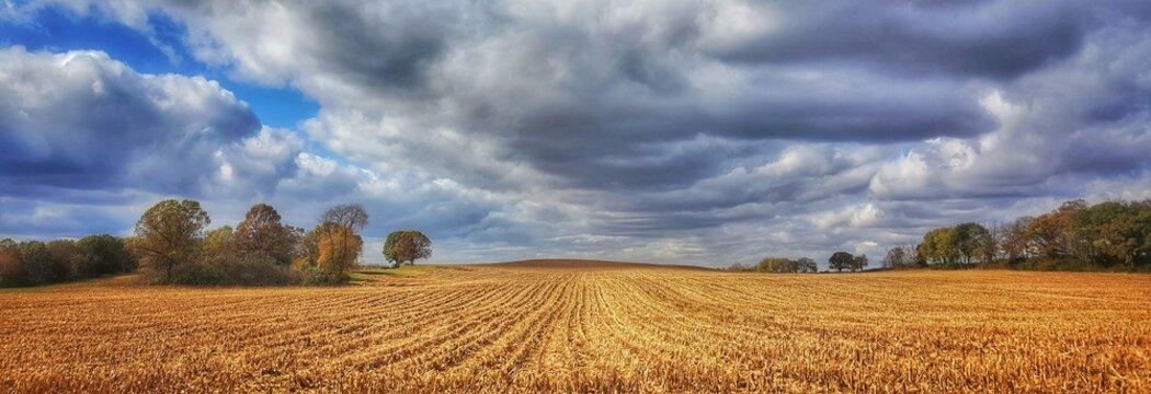 Farmfield rows & clouds