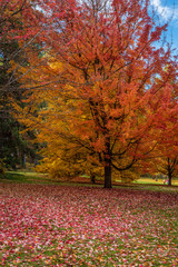 Autumn scenery at Finch Arboretum, Spokane, Washington, USA