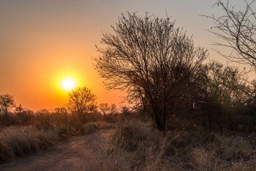 African sunset taken over a gravel road, trees and bushes