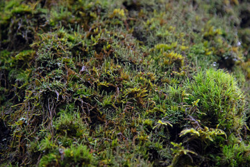 the natural background - moss