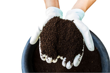 Hand of farmer with white glove  holding fertilizer. Vermicompost   on white background.Saved with clipping path.