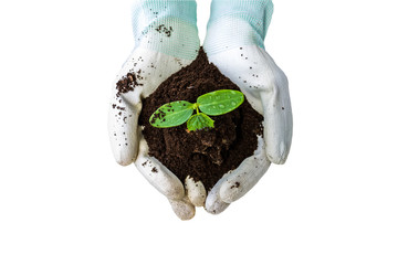 Hand of farmer with white glove  holding fertilizer. Vermicompost and young plant   on white background.