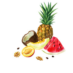 Watercolor illustration. Image of fruits and nuts. Watermelon, melon, pineapple, coconut, mango, nuts.