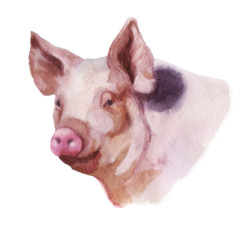 Watercolor illustration, the image of a pig.