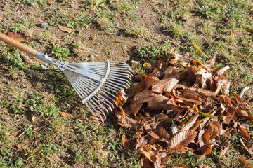 horizontal image with detail of a rake for gathering dried leaves photographed in a garden